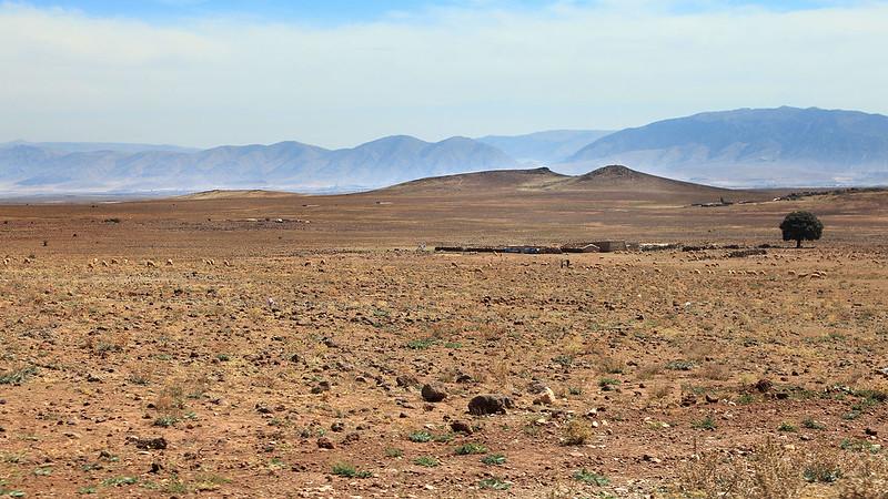Berber flock