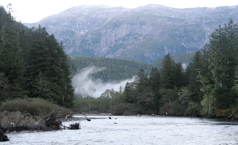View up the river with grizzly bears fishing