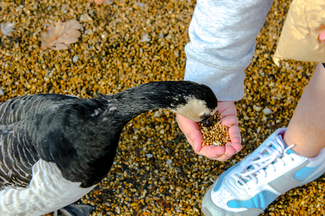 Seaview Wildlife Encounter en la Isla de Wight