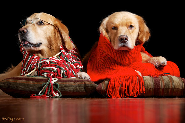 Knitting Dogs