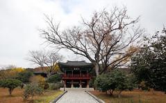 Tongyeongsi_20141125_23