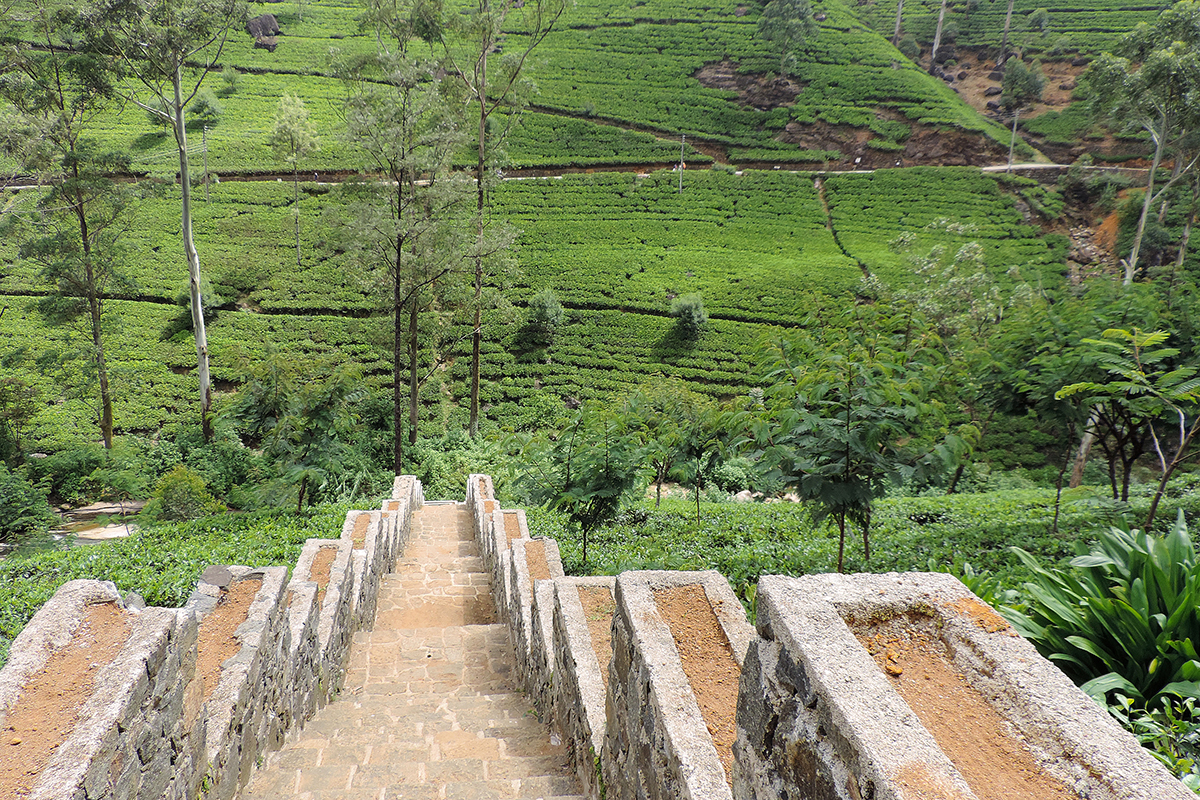 Elevation Of Nuwara Eliya  Sri Lanka