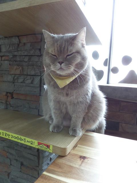 Smug Fat cat