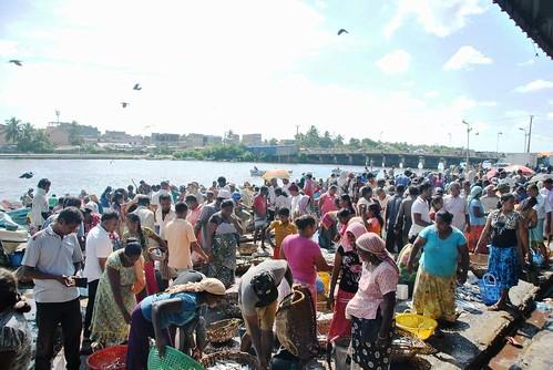 169 Fish Market Chilaw (10)