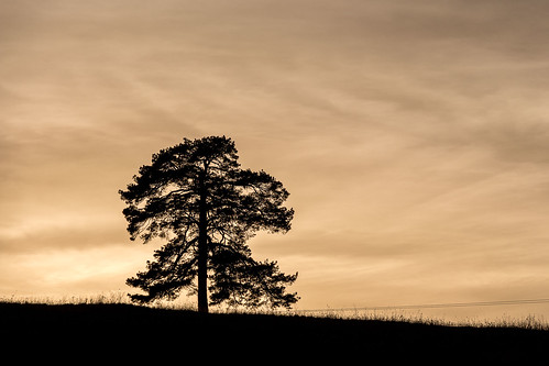 tree silhouette serbia zlatibor zlatibordistrict