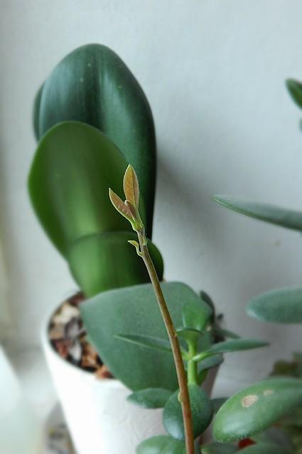 авокадо листики близко маленькие