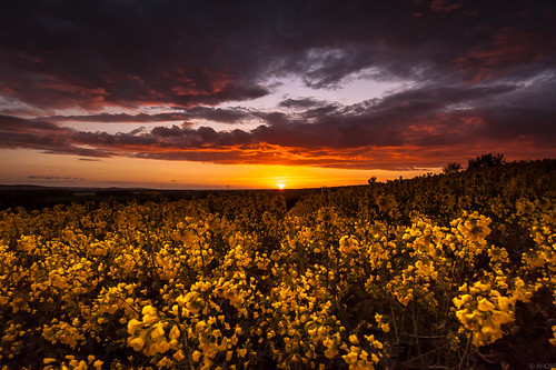 sunset sun clouds germany landscape deutschland sonnenuntergang cloudy feld wolken rape landschaft sonne wolkig rapsfeld niedersachsen barsinghausen barrigsen