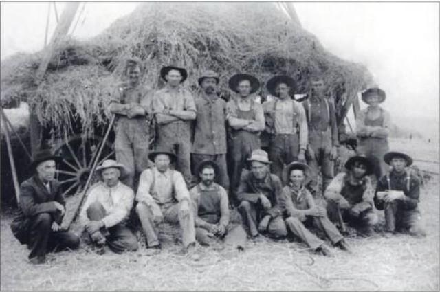 bean harvest crew 1905
