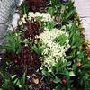 #Spring #garden in #Parkdale