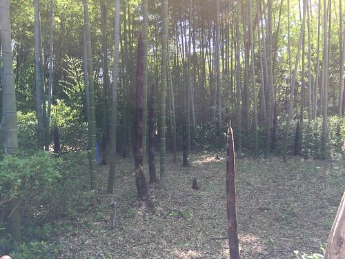 昭和の日の昭和記念公園