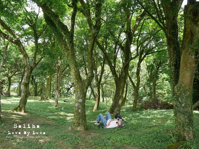 陽明山踏青一日遊景點 第二停車場杜鵑茶花園 (2)