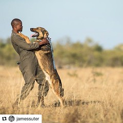#Repost @jamessuter ・・・ Wisdom grew up with dogs herding his grandfather's cattle, but never thought he would be working with them to combat poaching. They clearly have a strong bond. We are on assignment for @unitedforwildlife at the South African Wildli