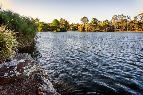 trees lake water landscape lakes lichen forestlake