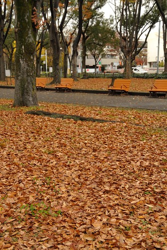 Carpet of fallen leaves in Hisayaodori park No.1.