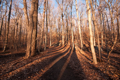 trees ny newyork shadows westchestercounty sigma1020mm southsalem lewisboro leonlevypreserve