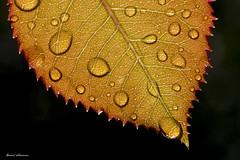 Regentropfen - Raindrops