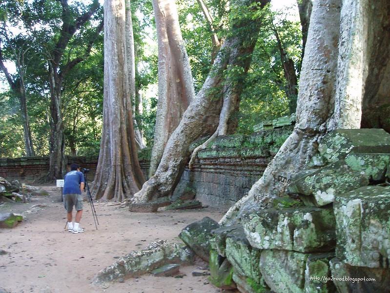 Камбоджа,легендарный Та Пром