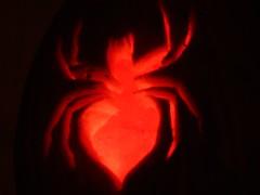 Day 304 - Fiery Spider