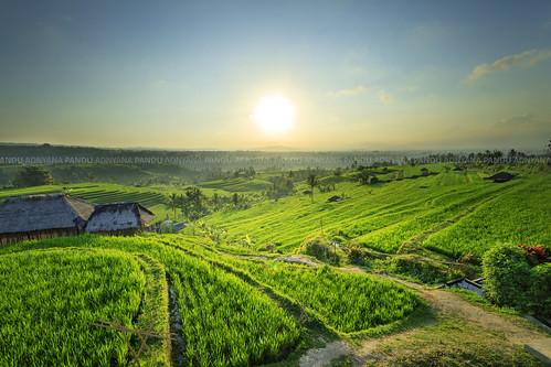 bali sunrise indonesia ricefield jatiluwih baliphotography photographytour photographyguide