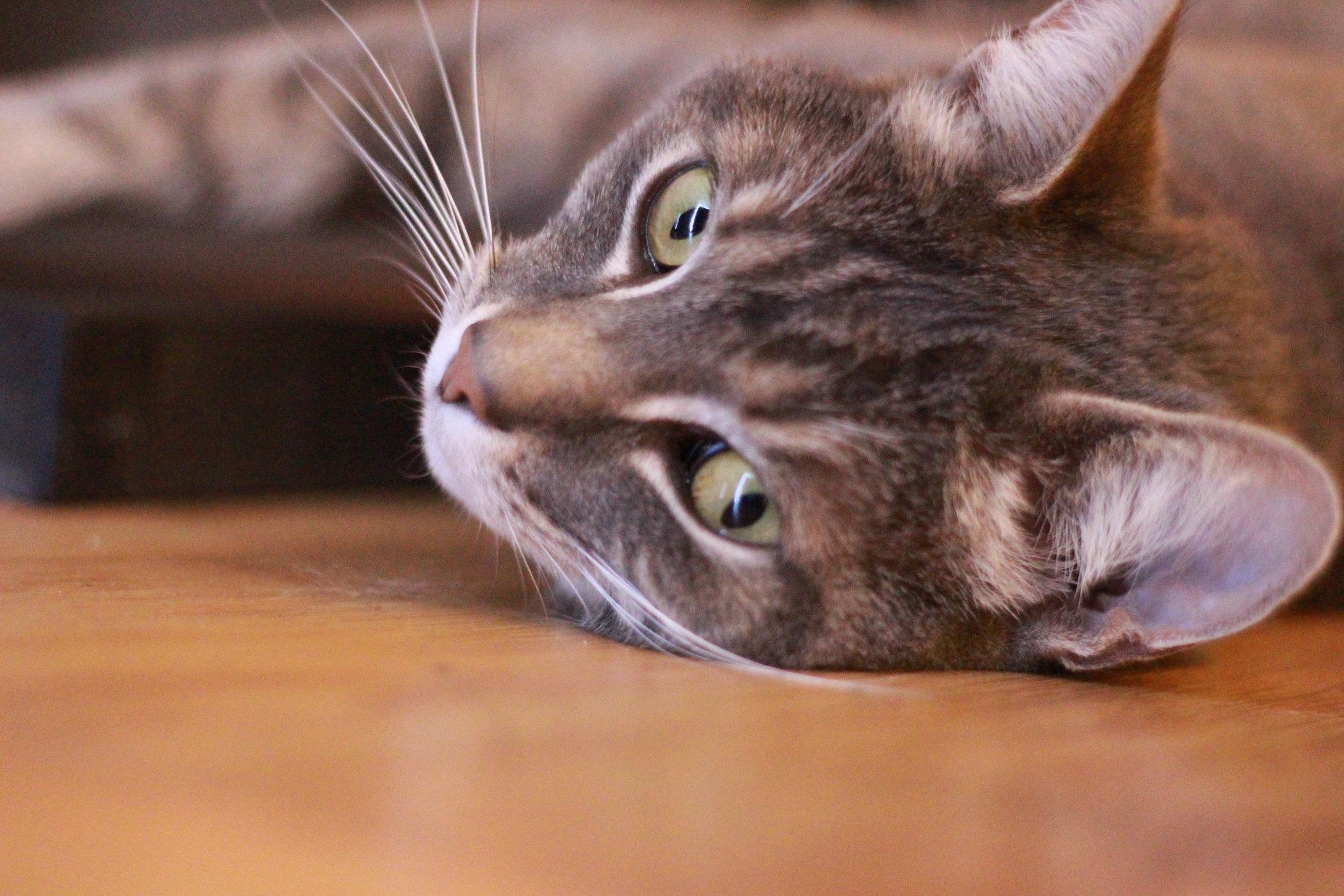 post your cat pictures please singletrack forum