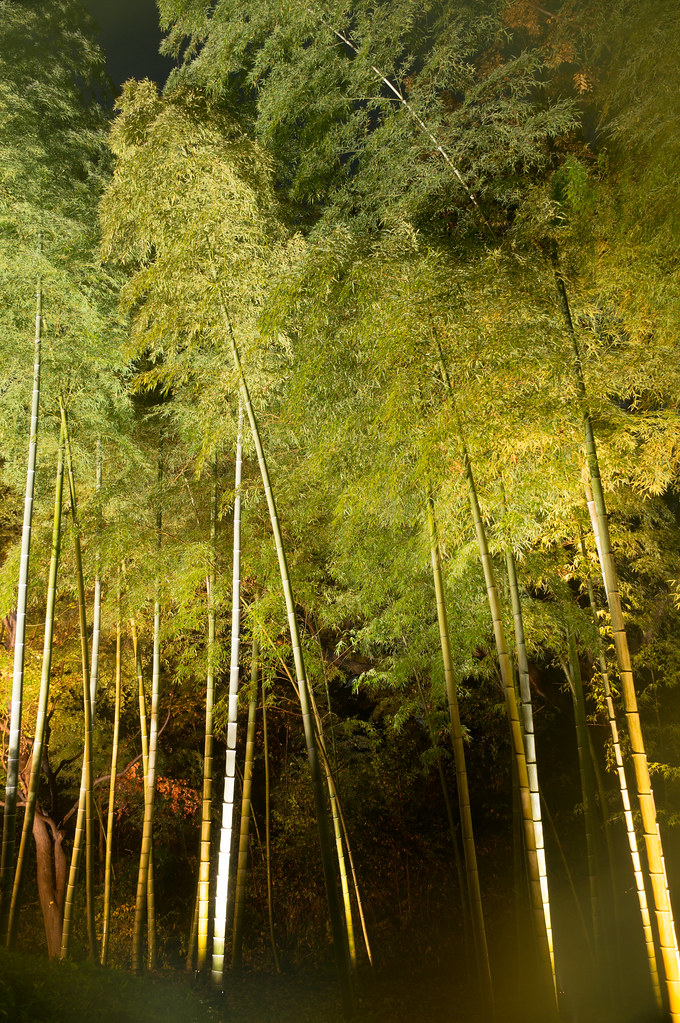 六義園 竹林