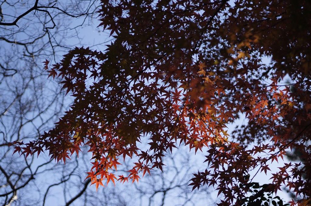 Tinted autumn leaves in KANAZAWA