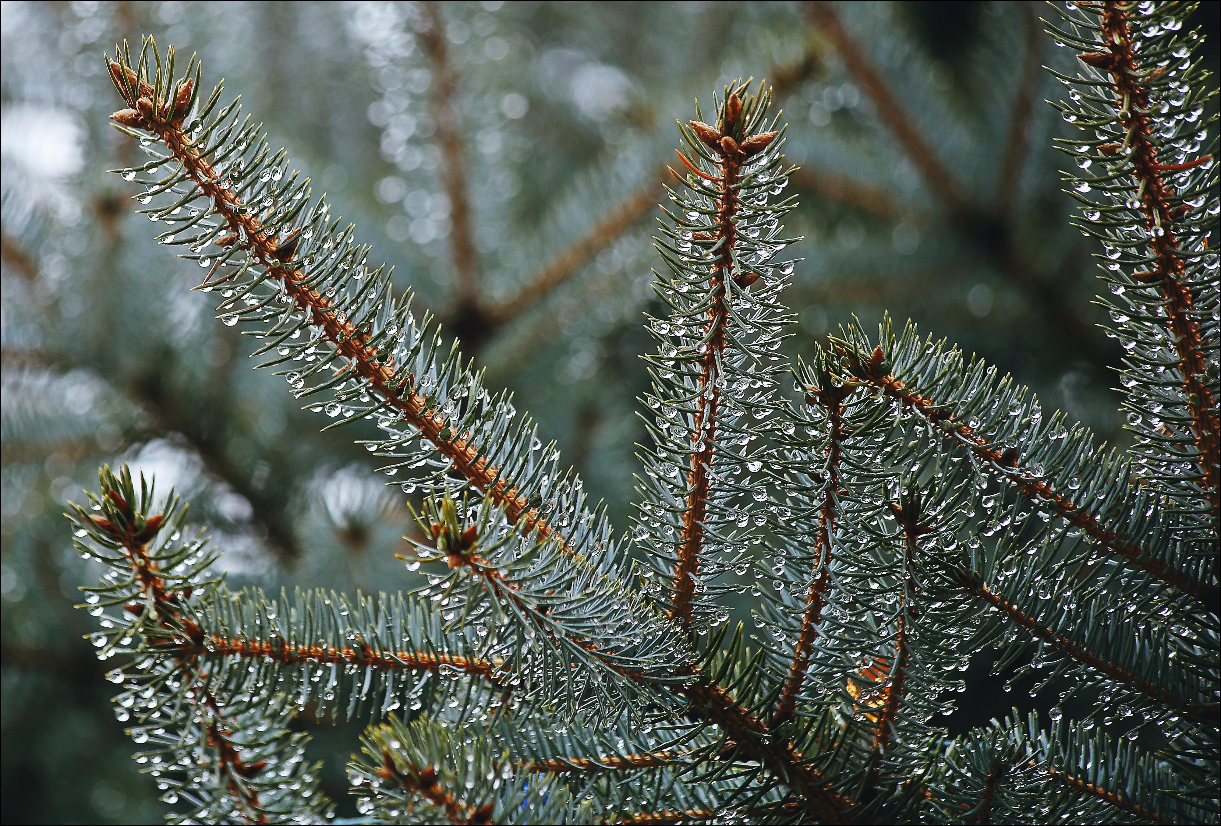 Christmas Eve...Rain. christmas, eve, rain, canon, 6d. buy photo