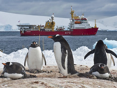 HMS PROTECTOR the Ice Patrol Ship visit to Antarctica