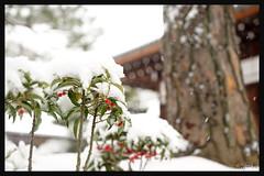 日本京都-金閣寺-雪.51