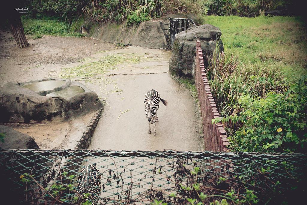 木柵動物園小記