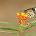 DSC_5681 by P. Thyaga Raju