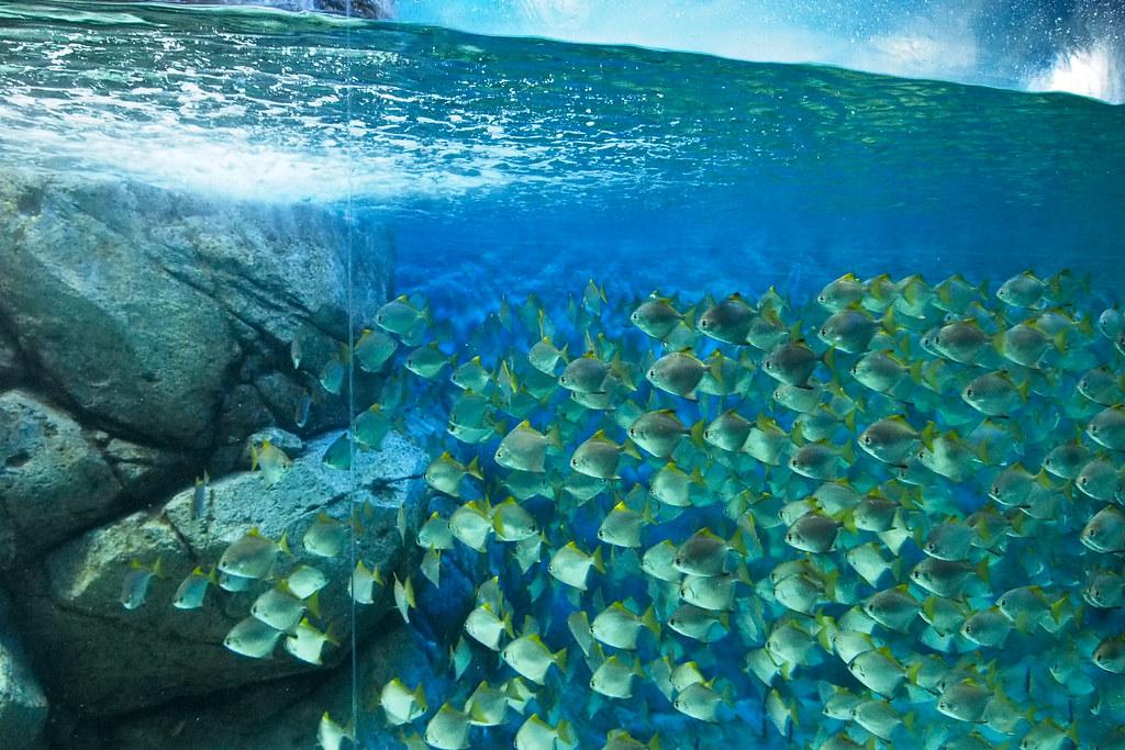 海洋水族馆 S.E.A. Aquarium