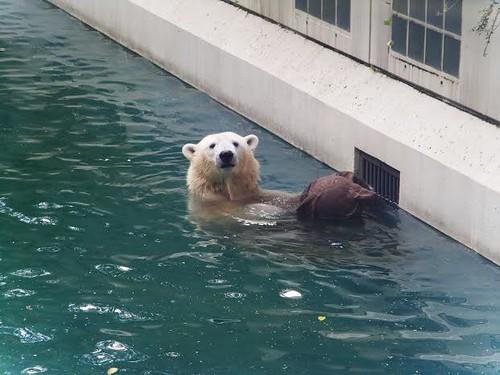Anori, Zoo Wuppertal, 27.9. 2015 II