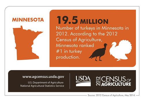 Minnesota: 19.5 million, number of turkeys in Minnesota in 2012. According to the 2012 Census of Agriculture, Minnesota ranked #1 in turkey production.