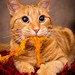 Pumpkin by barbara.jackson55