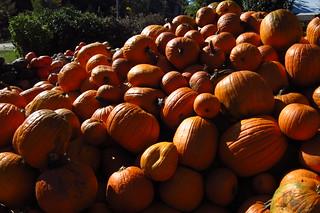 Pumpkins at Lull Farm, NH