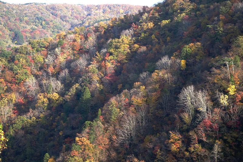 Tinted autumn leaves at IOUZEN