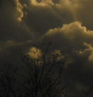 clouds, spotlight on leaves