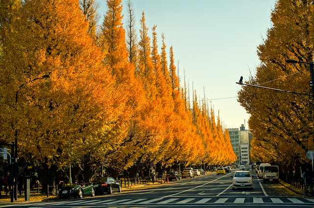 Gingko Avenue at Meiji Jingu Gaien (明治神宮外苑)  in Tokyo Japan