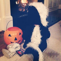 After-party by the fireplace with her stash 🎃🍂👻🔥#oursweetava #halloween2014 #treatortreat