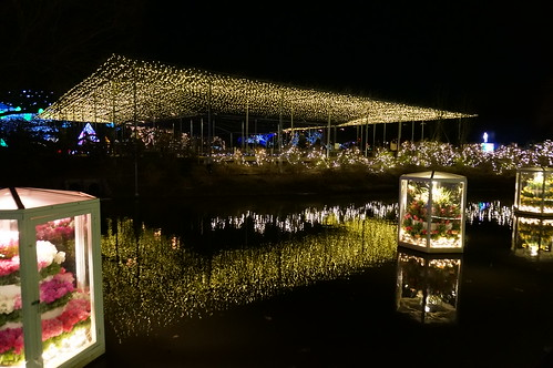Flower Fantasy 2015 illumination at Ashikaga Flower Park 21
