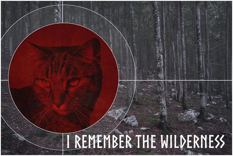 I Remember The Wilderness