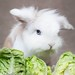 The bunny and the lettuces!