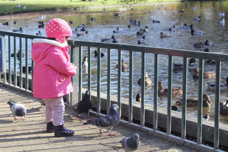 Feeding ducks at Westerpark Amsterdam