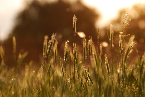 light sunset summer sun tree green nature grass golden back amazing europe bokeh ground down bulgaria hour