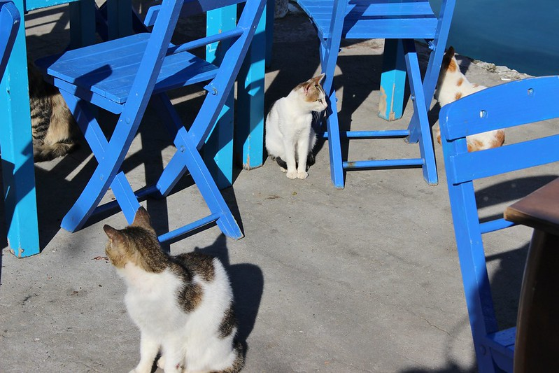 cats, Kastellorizo, Spain