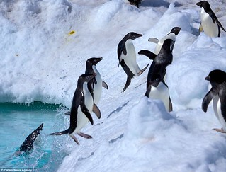 penguin-jump003