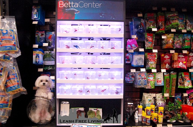 Betta Center
