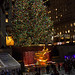 Reckefeller Center Tree - I