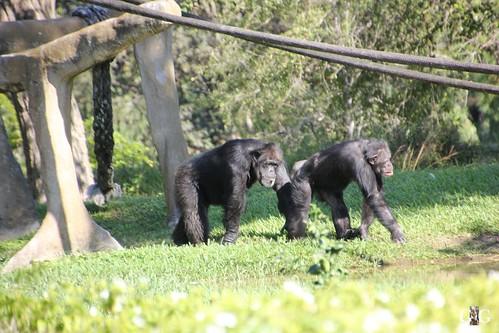 Zoo Miami 14.11.2014 49